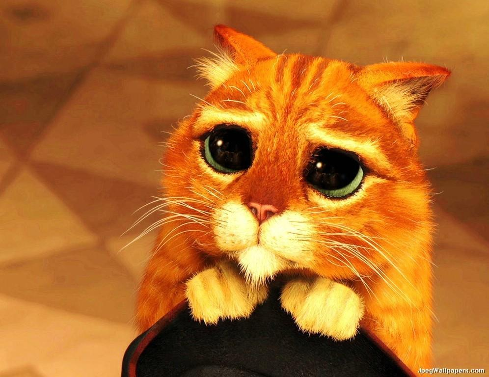 Resultado de imagem para gato coitado do shrek