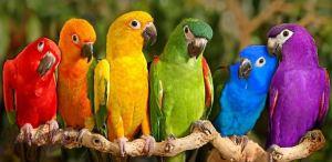 Six parrots